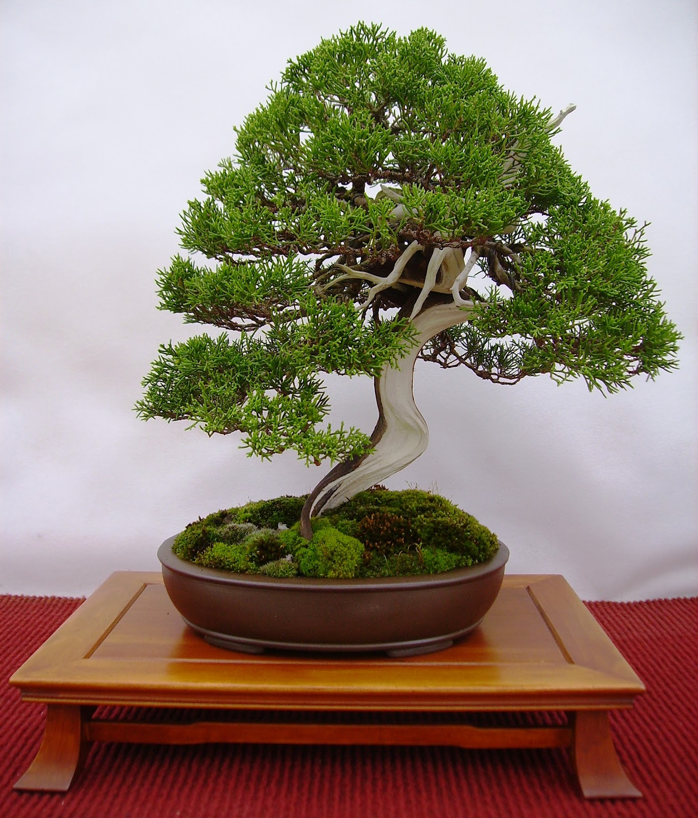 Bespoke Bonsai Stands More Trees From The BSA Show At Willowbog