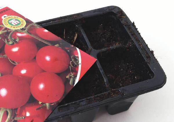 Försådd av tomaten Garderner's Delight