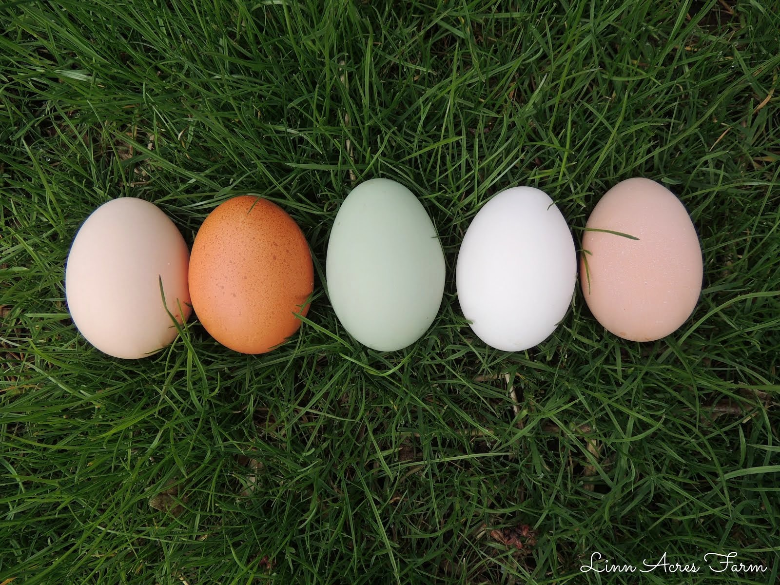 Colors of our Eggs!