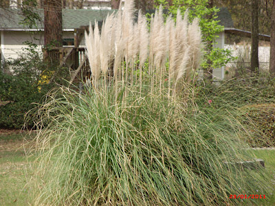 The southern garden for Landscaping ideas with pampas grass