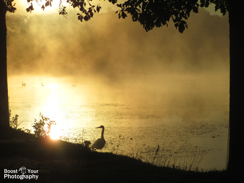Trees frame a heron's sunrise silhouette | Boost Your Photography