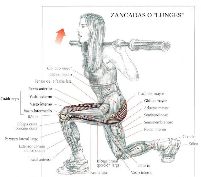 camiNOsolo: El Core: lo que conecta brazos y piernas.