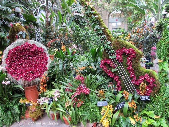 Arrangement of orchids at US Botanical Gardens in DC