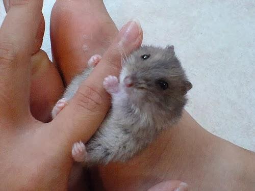 tinny animals on fingers 1