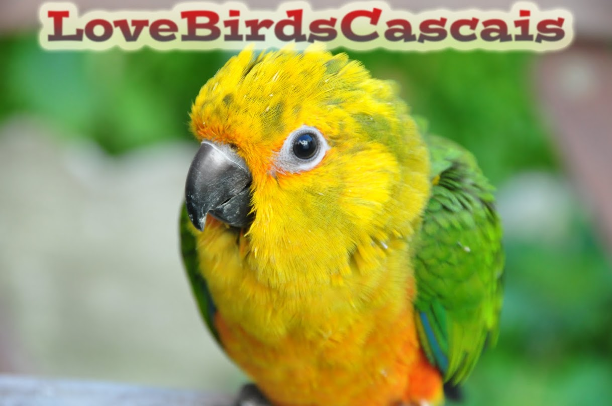 LoveBirdsCascais