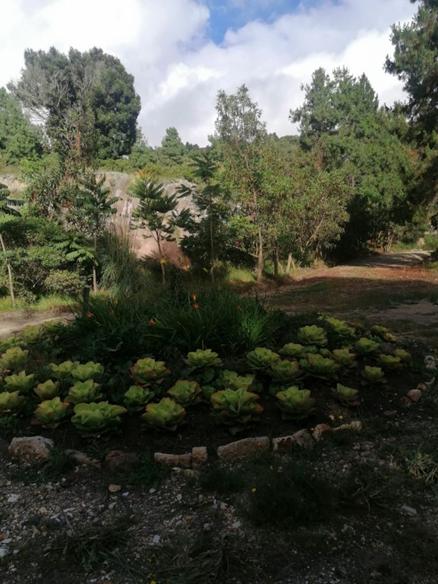 Boyacenses ya pueden volver a visitar el Jardín Botánico de Tunja