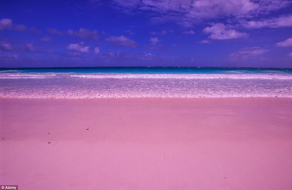 الشاطئ الوردي