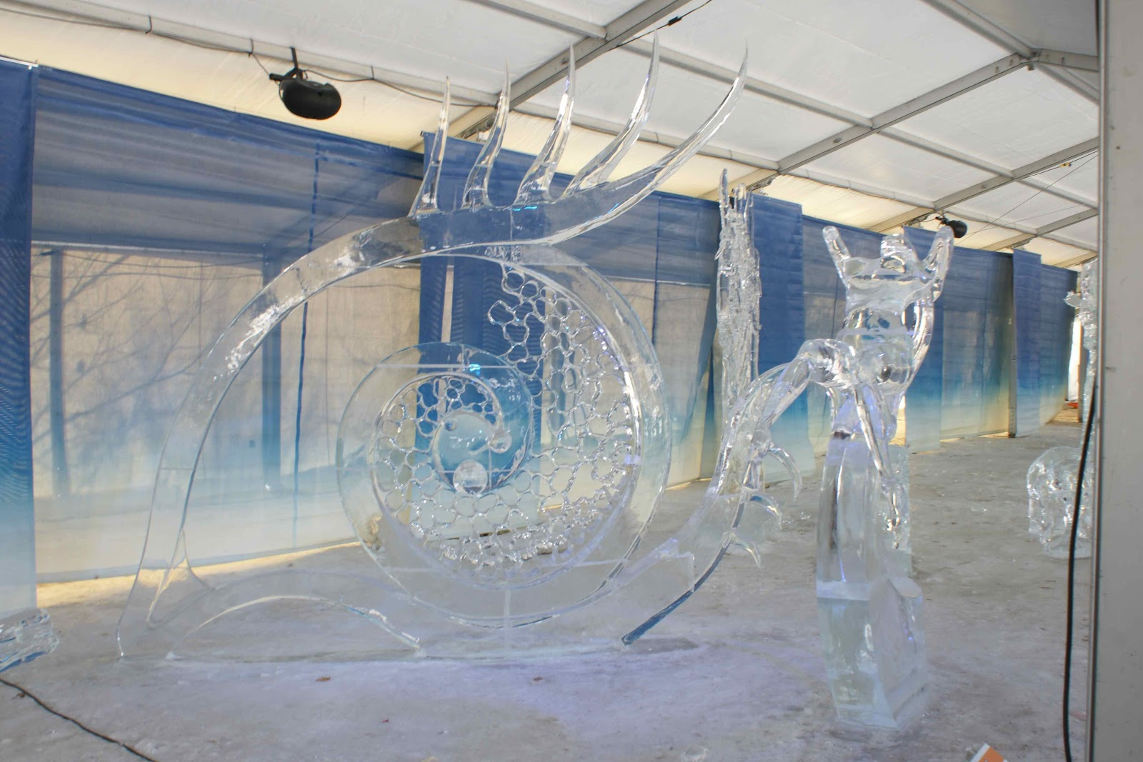les pingouins de toronto et kiki. Black Bedroom Furniture Sets. Home Design Ideas