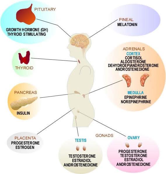 Kt S Blog Endocrinologist
