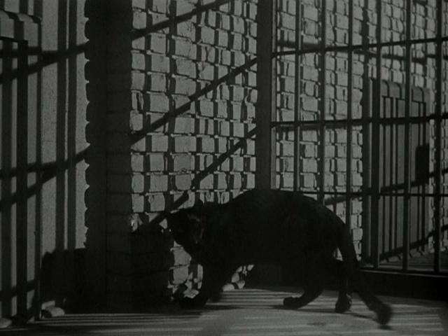 theredtele�honε still film cat people 1942