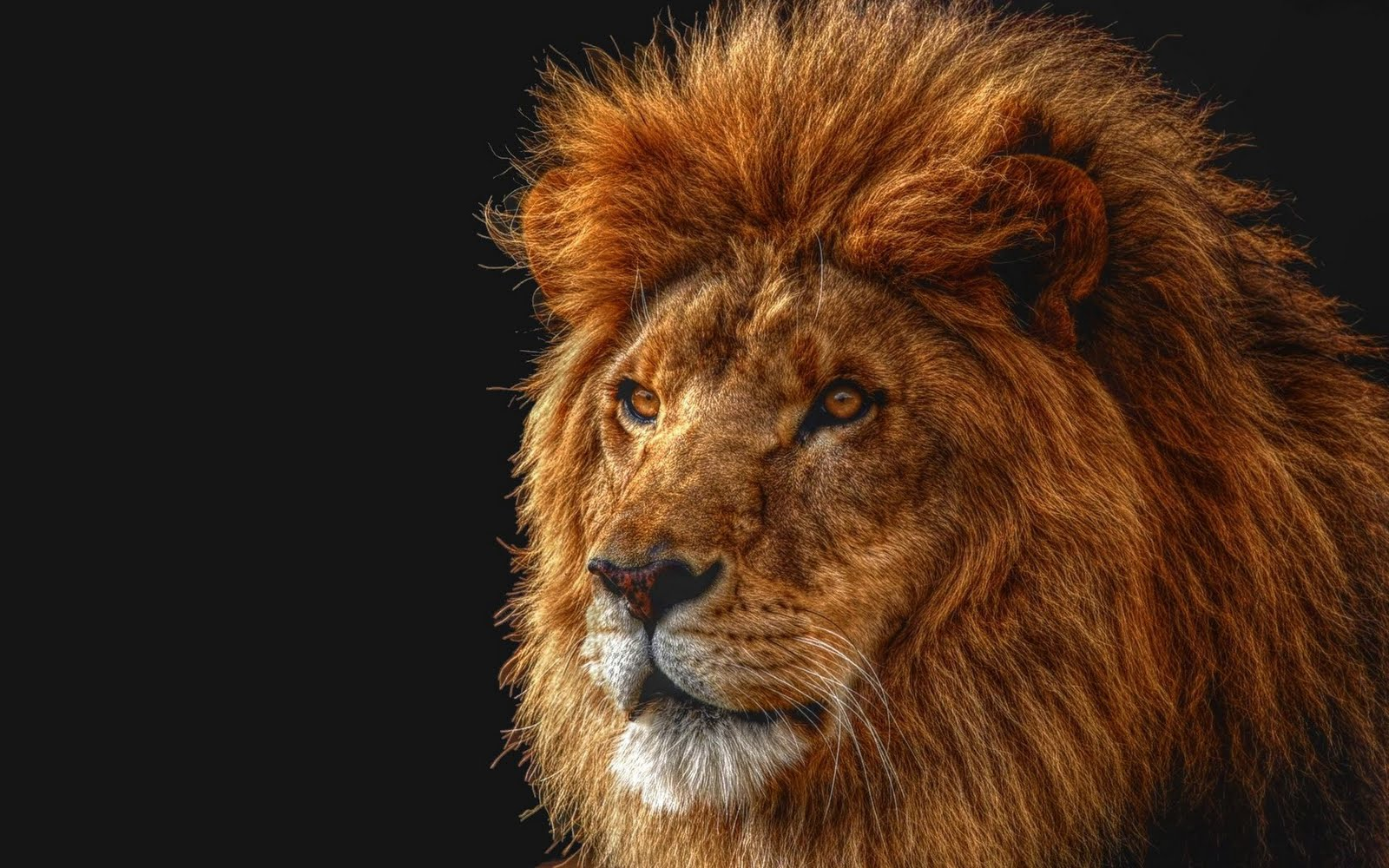 http://3.bp.blogspot.com/-Jw1pckruMEM/TkAZ8_RPmBI/AAAAAAAACEY/w2lPNTcruPk/s1600/cheetah+%252817%2529.jpg
