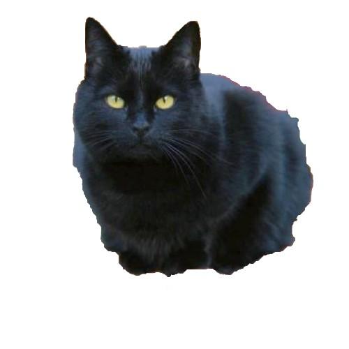 Inform tica 4 daniel for Red transparente para gatos