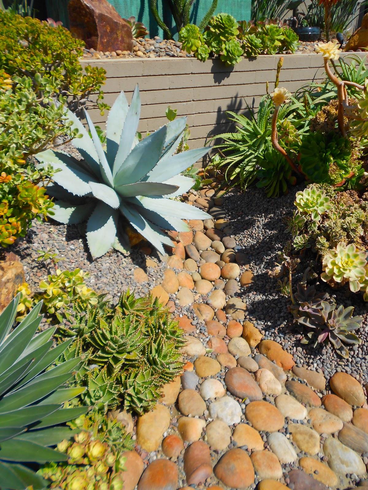 Deeter Buckner Design Llc Cactus Succulent Gardens At Their Best