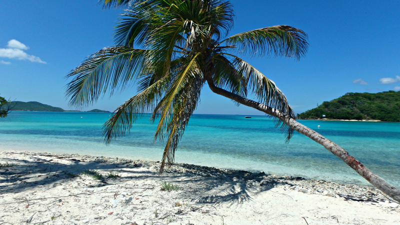 Palm Tree on a Caribbean Paradise island in The Grenadines
