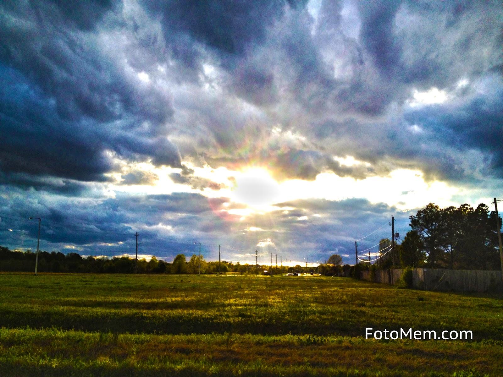 Field Of Sunshine - Bartlett Tennessee