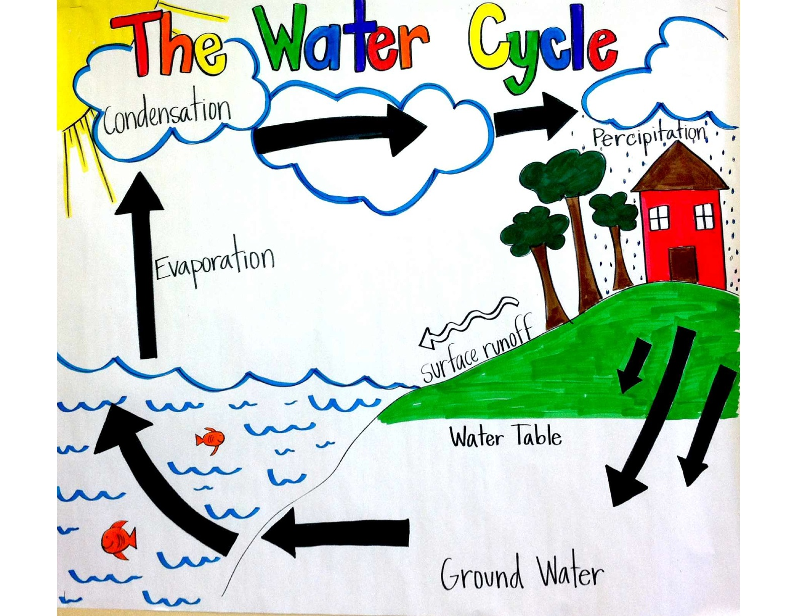 Photosynthesis Worksheet 3rd Grade also Draw The Water Cycle 5th Grade ...