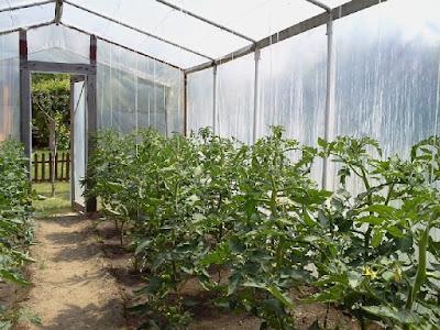 Jak zbudować szklarnie na pomidory