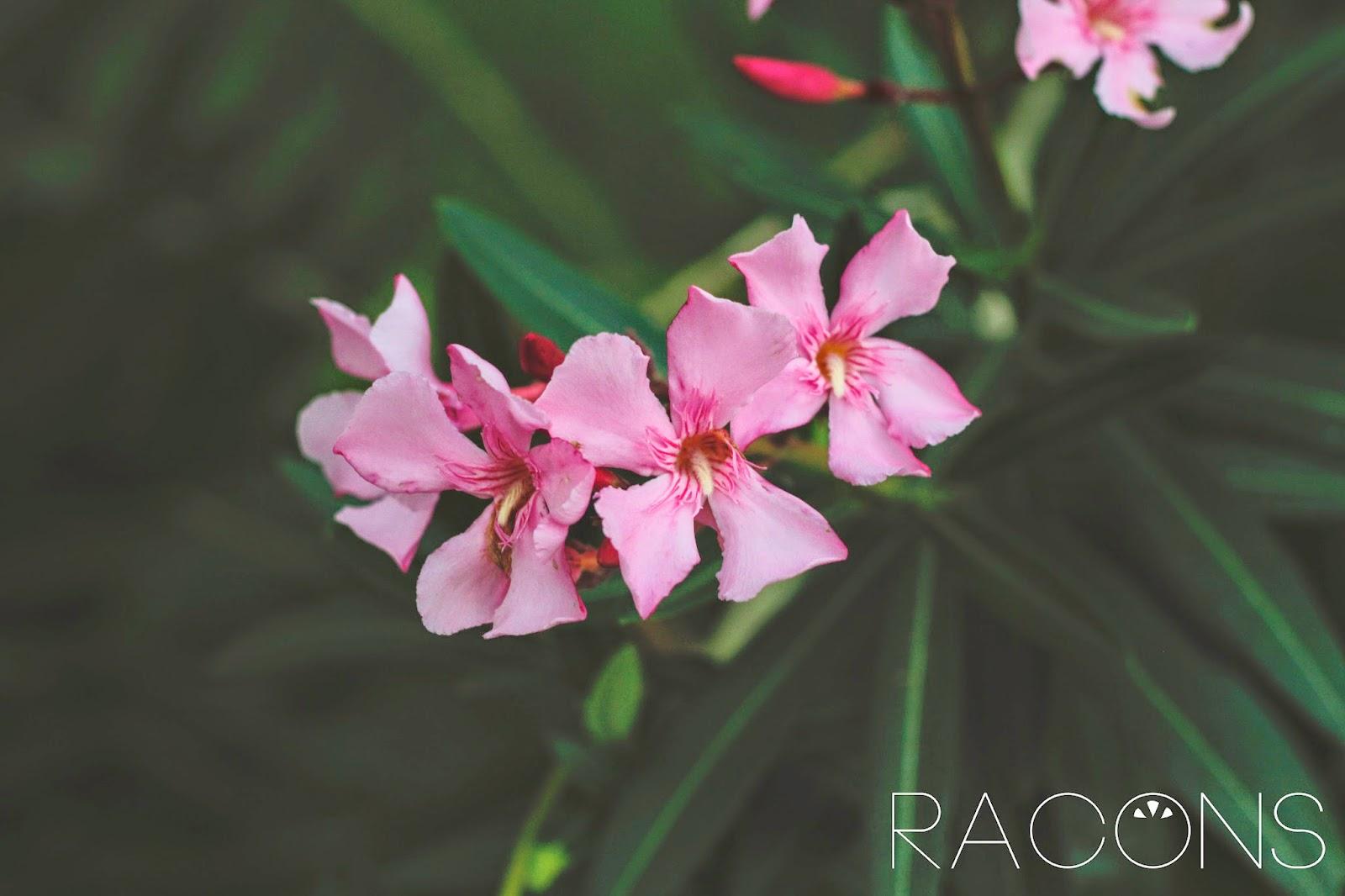 Flors jardins de la jueva
