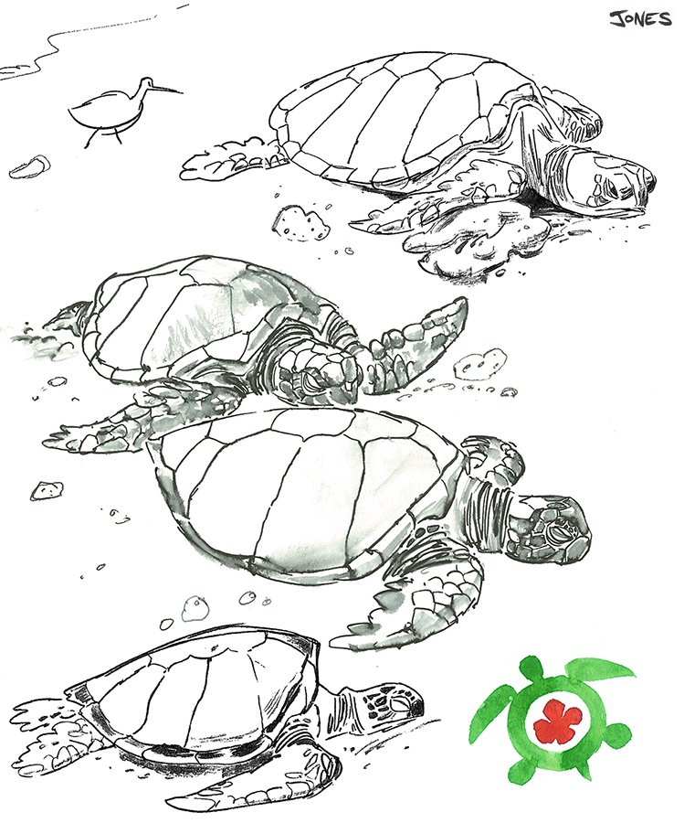Line Drawing Turtle : Sea turtle line drawing
