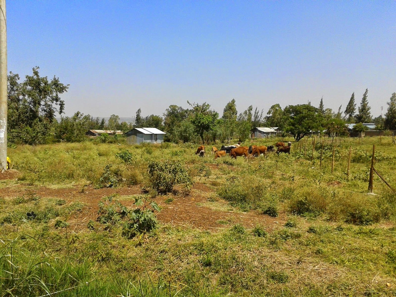 Invest in land for sale Siaya today