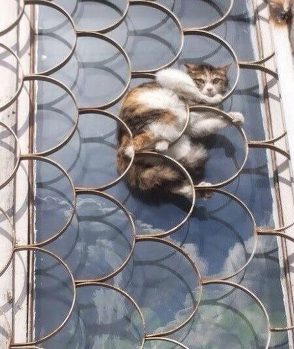Funny cats - part 107 (40 pics + 10 gifs), cat pictures, cute cats, adorable cats