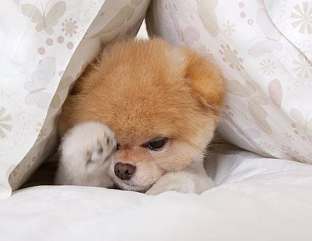 Worlds Cutest Dog