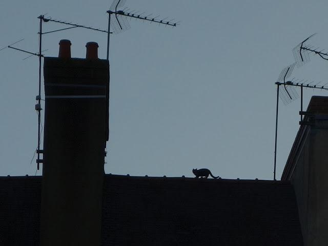 Il a trouvé une échappatoire ! - Place Saint-Germain, Rennes, mardi 1er septembre...