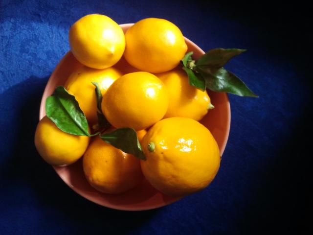 Galley Kitchen Gourmet: Meyer Lemon Olive Oil Cookies