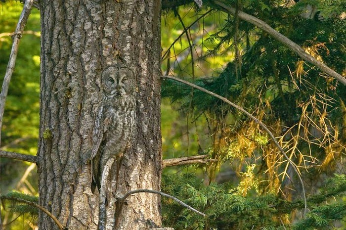 Camouflage in Nature by Art Wolfe (16 pics), nature photos, animal pics, wildlife pics, Art Wolfe photos, amazing wildlife pics