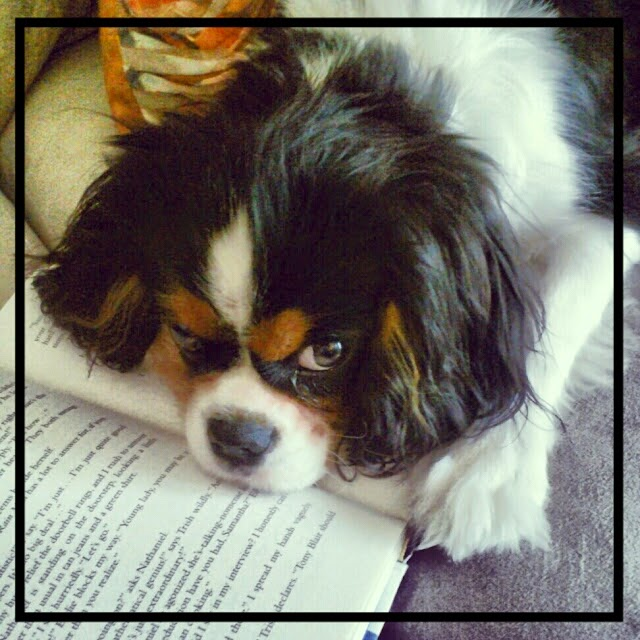 Shiloh the Cavalier King Charles with Book, by Hillary Manton Lodge