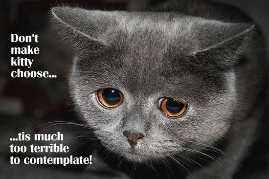 [Image: Don%2527t+make+kitty+choose.jpg]