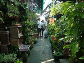 Garden Market in Bangkok