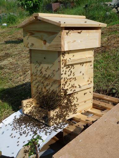 Díky vašim článkům v moderním včelaři jsem se seznámil s