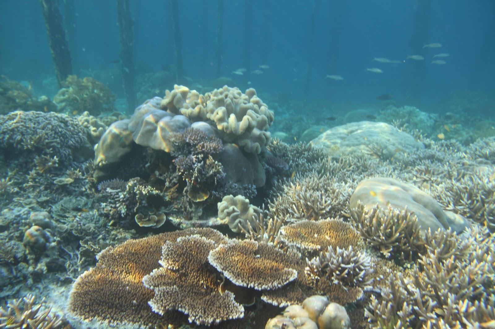 Image result for 3.  Terumbu karang yang beraneka ragam