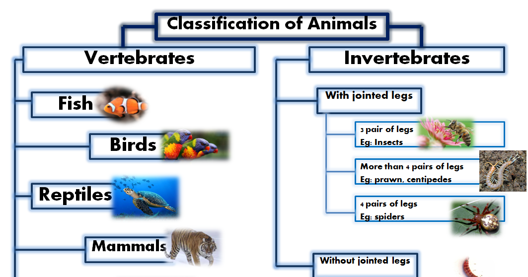 classification of vertebrates A secondary school revision resource for edexcel gcse biology about classification of species, with higher tier.