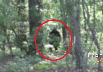 BIgfoot Hoax Georgia