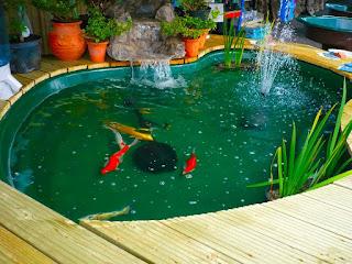 Foto Kolam Ikan Hias Sederhana Minimalis Lahan Sempit Terbatas