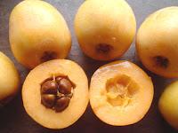 nisperos, citrico, fruta, china, origen, valencia, japon, temporada, rusos blancos