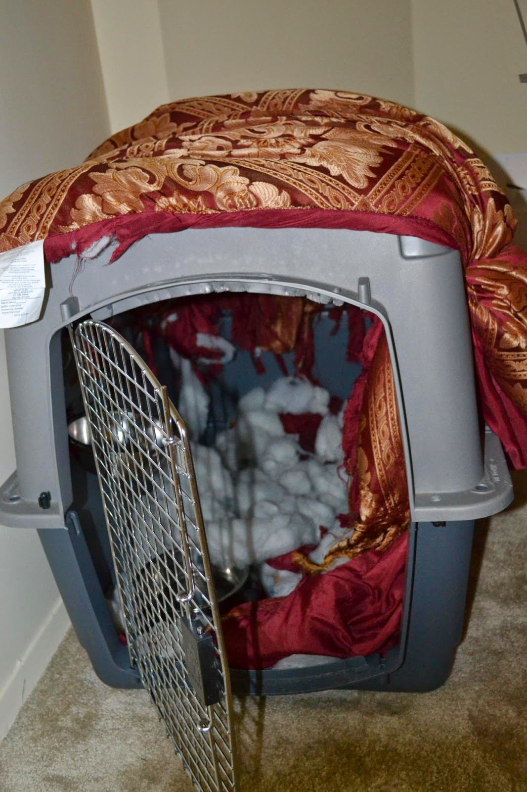 Crate training fiasco with destroyed comforter | Business, Life & Design