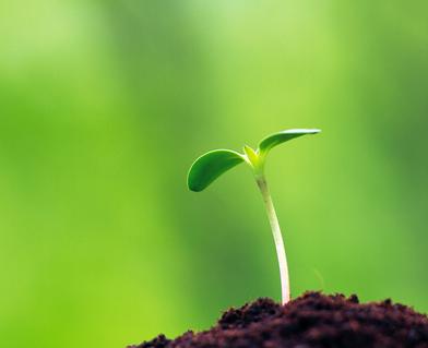 Pertumbuhan dan Perkembangan Pada Tumbuhan
