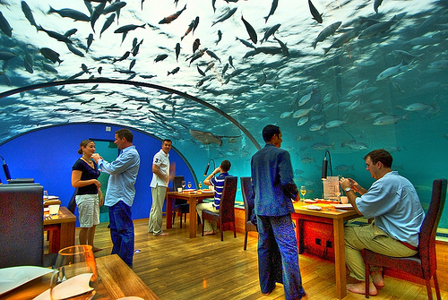 Interesting places to go underwater restaurant maldives for Ithaa prices