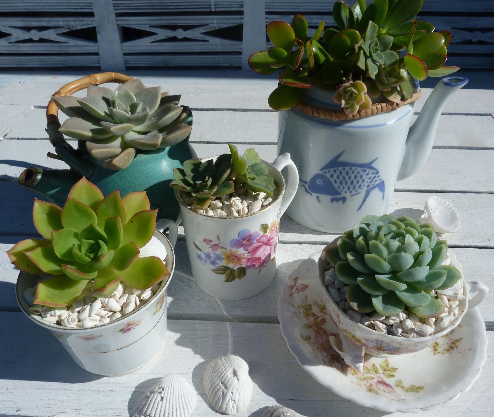 Diy Succulent Potting Mix Australia: Beachcomber: Succulent Garden