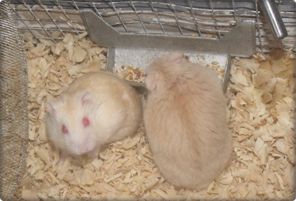 Paul Hamster Hedgehog And Persian Cat Blogspot