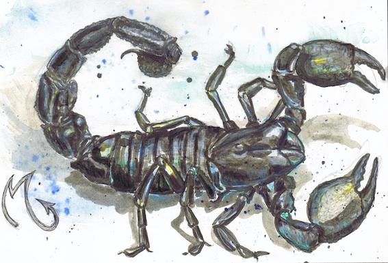Tierkreiszeichen, Skorpion