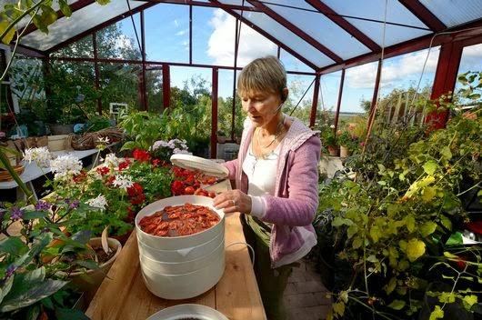 Med trädgården i bloggform