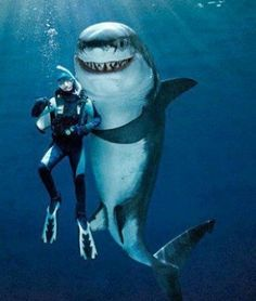 The Left Shark and Scuba diver Benny Sheridan welcome you