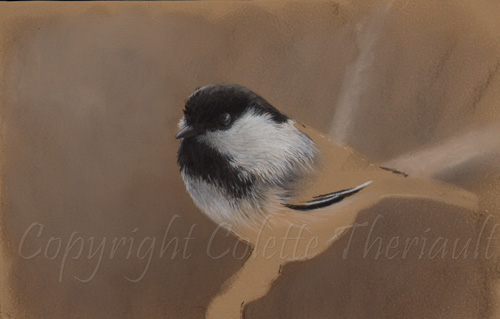 chickadee bird painting in progress by Canadian wildlife artist Colette Theriault