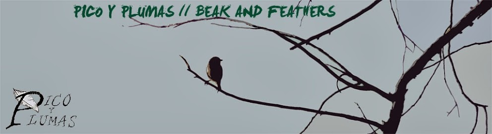 Pico y Plumas  //  Beak and Feathers