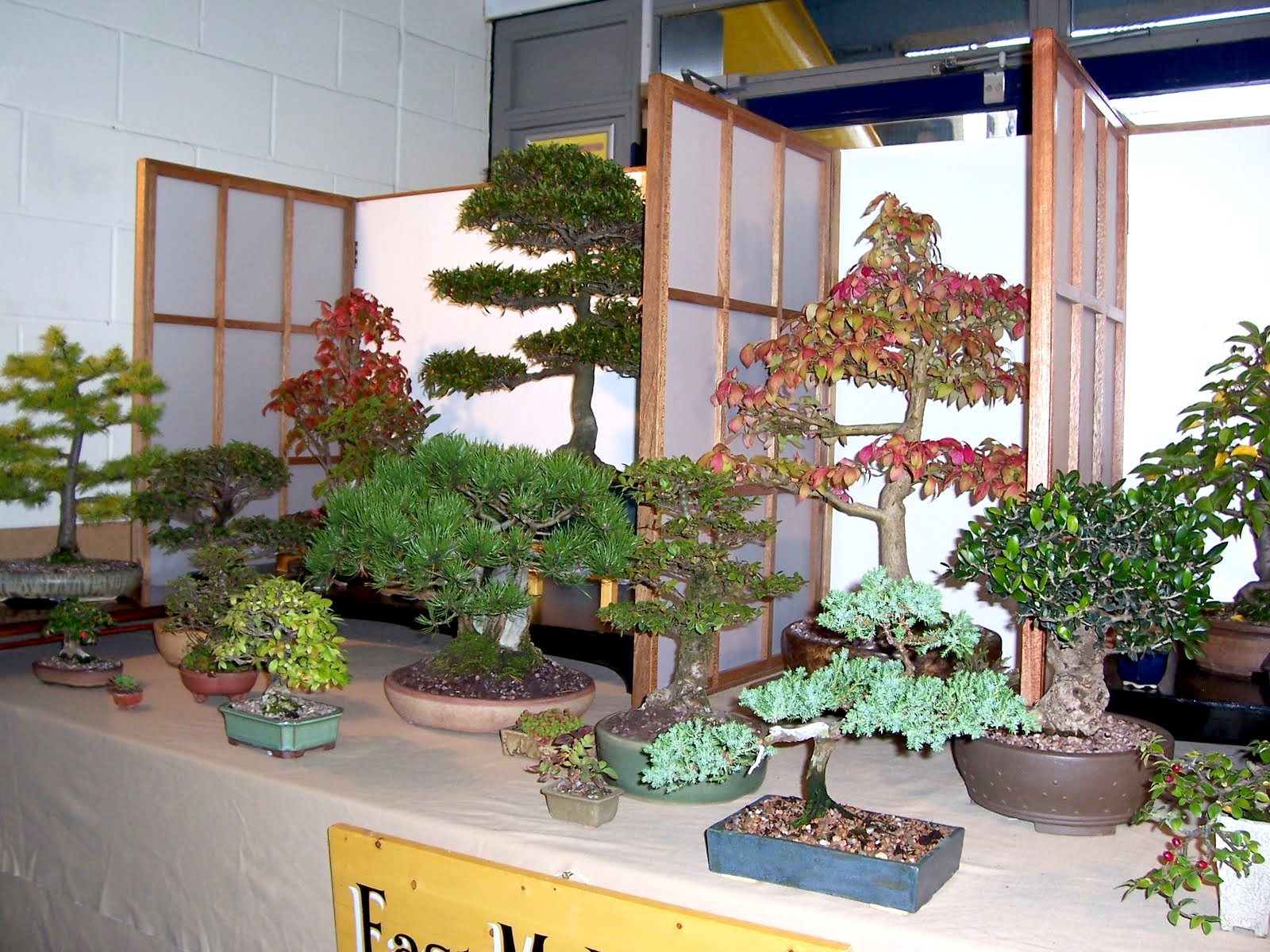 MiKo Bonsai September 2011
