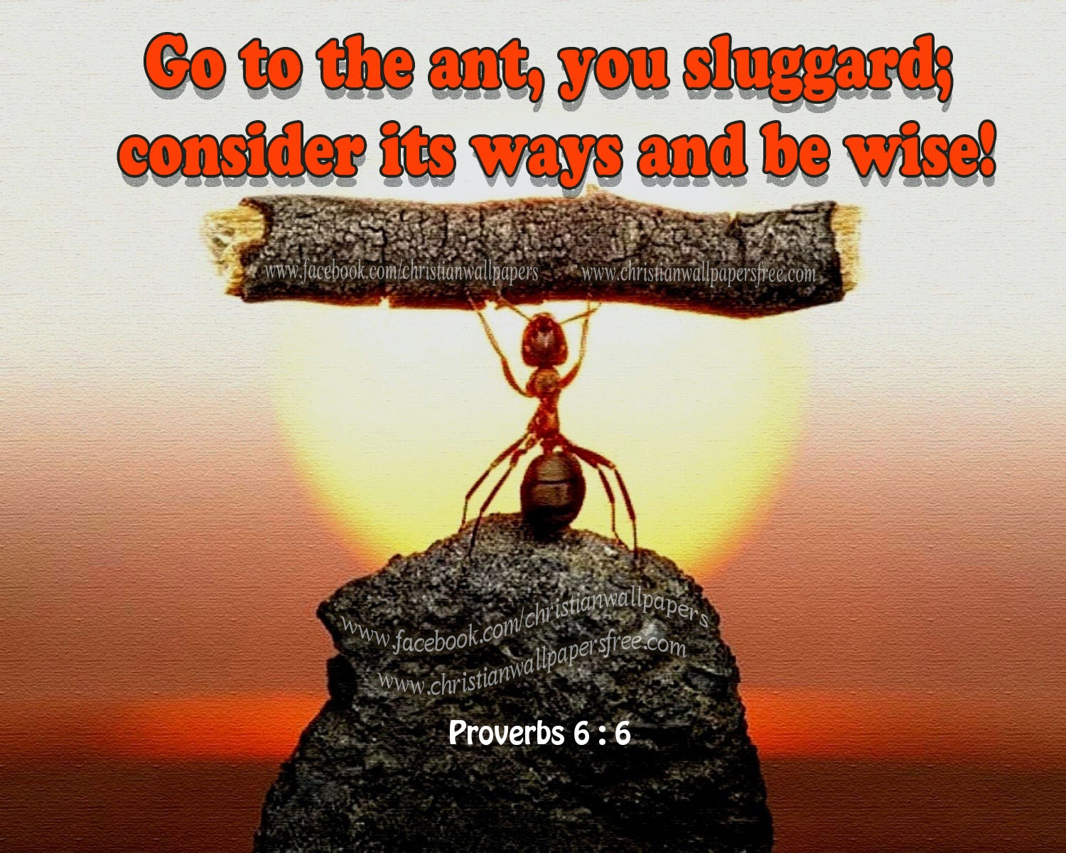 Brock family Bible study: Proverbs: The Ant and the Sluggard